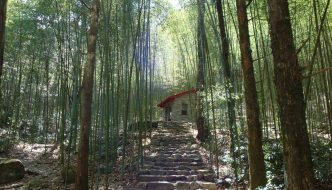 Magic Bamboo Forest in Basianshan